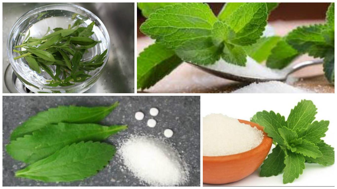 stevia propiedades medicinales