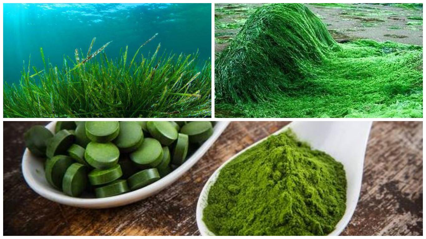 Beneficios y propiedades de la spirulina