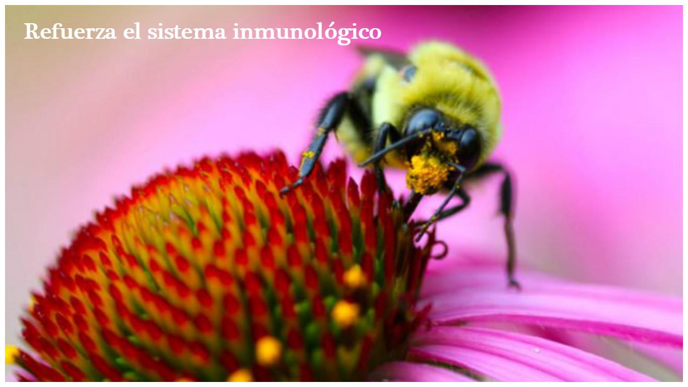 Protege y refuerza el sistema inmunológico