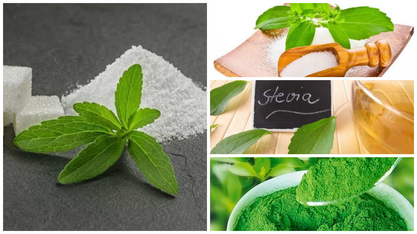 propiedades de la stevia pdf