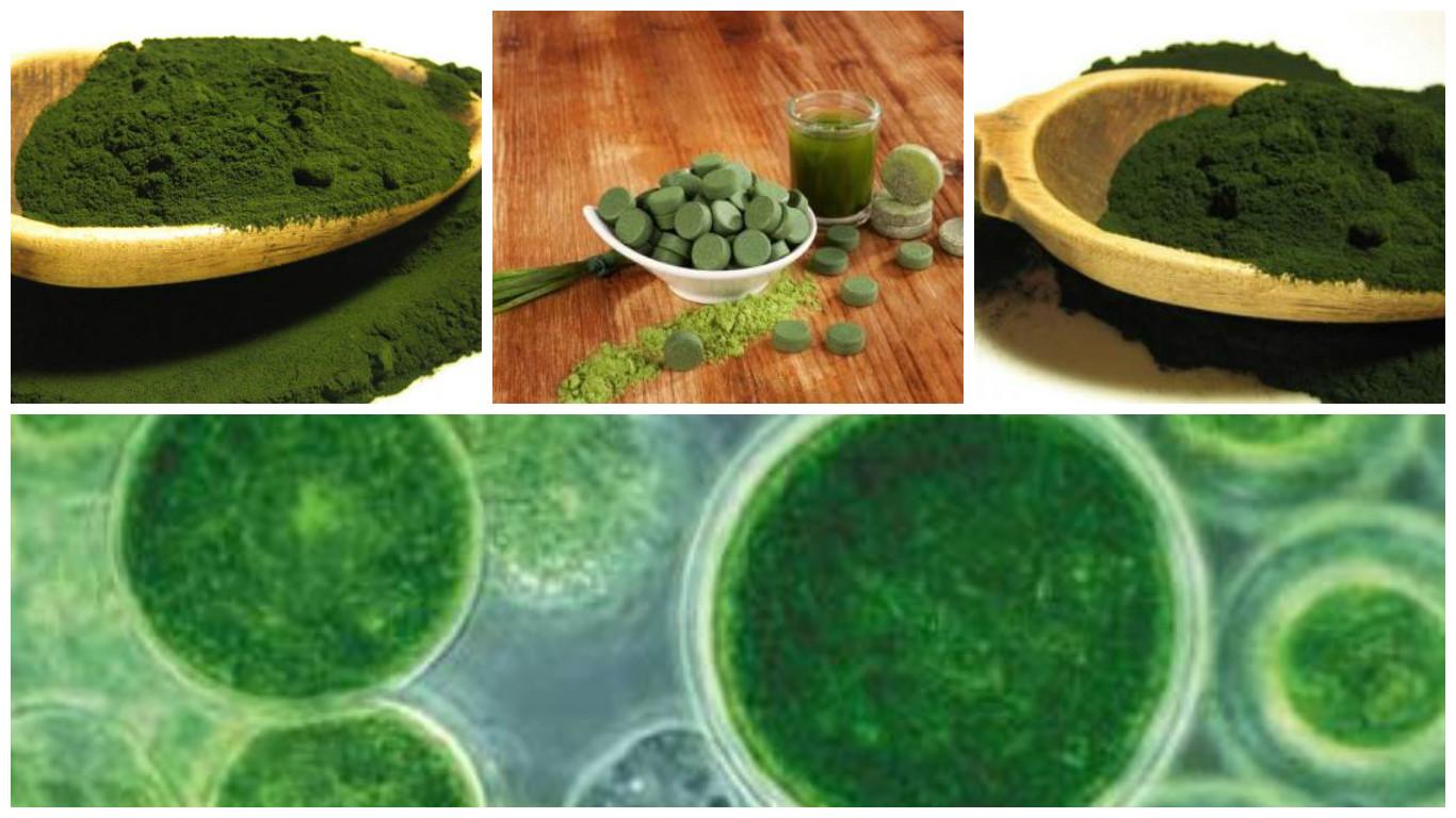 Alga verde con fantásticos beneficios para nuestra salud