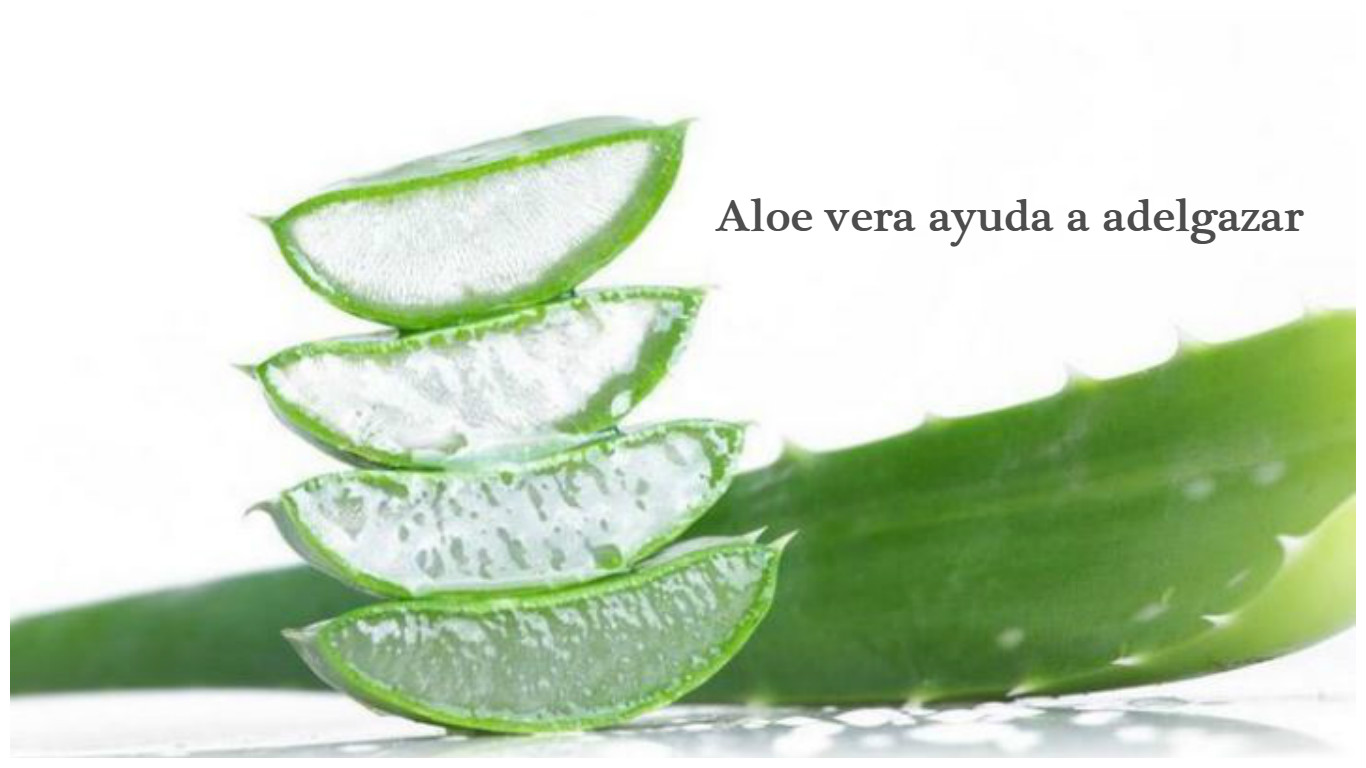 Adelgaza con Aloe Barbadensis Miller