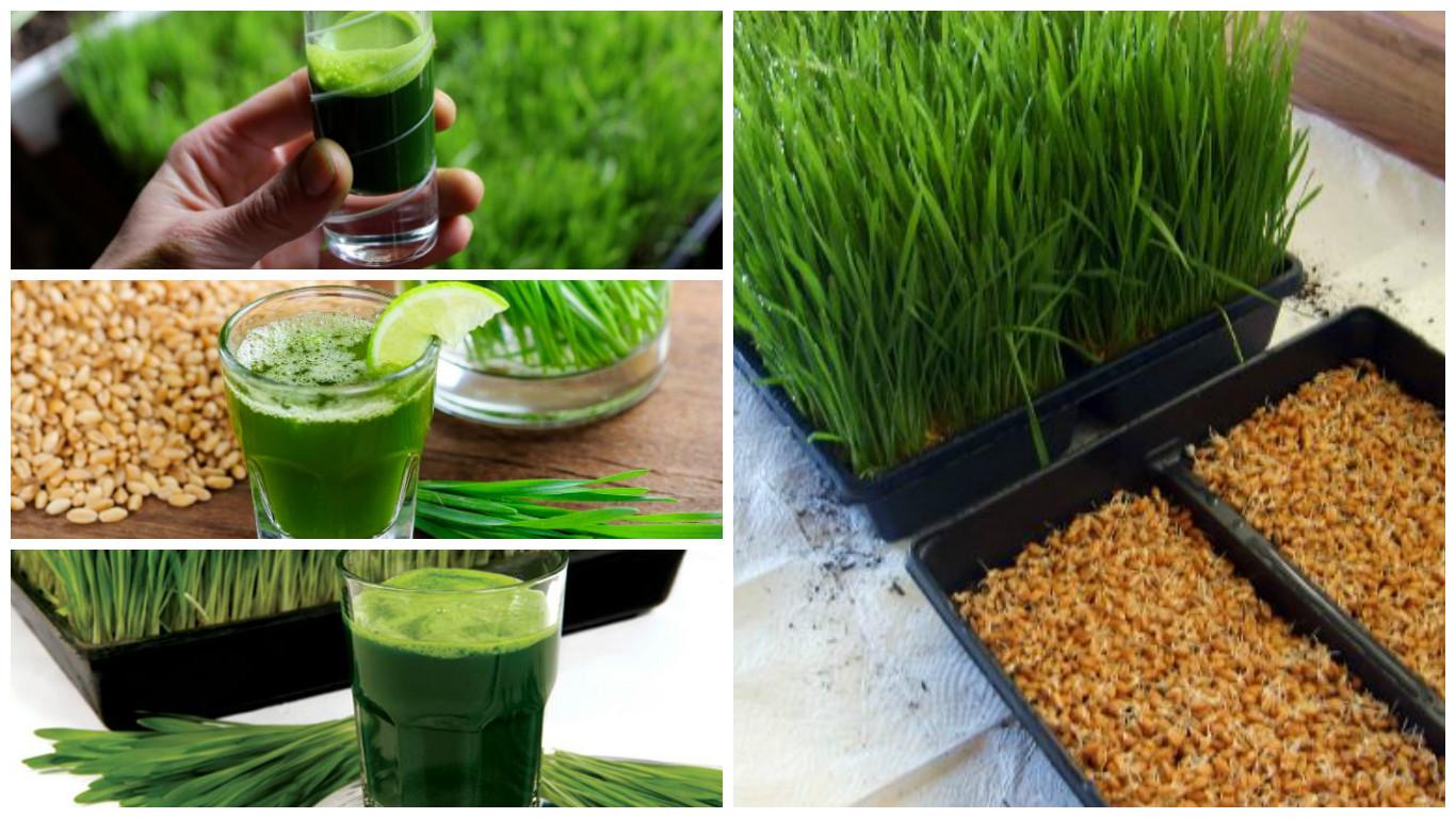 Triticum aestivum vitaminas y minerales
