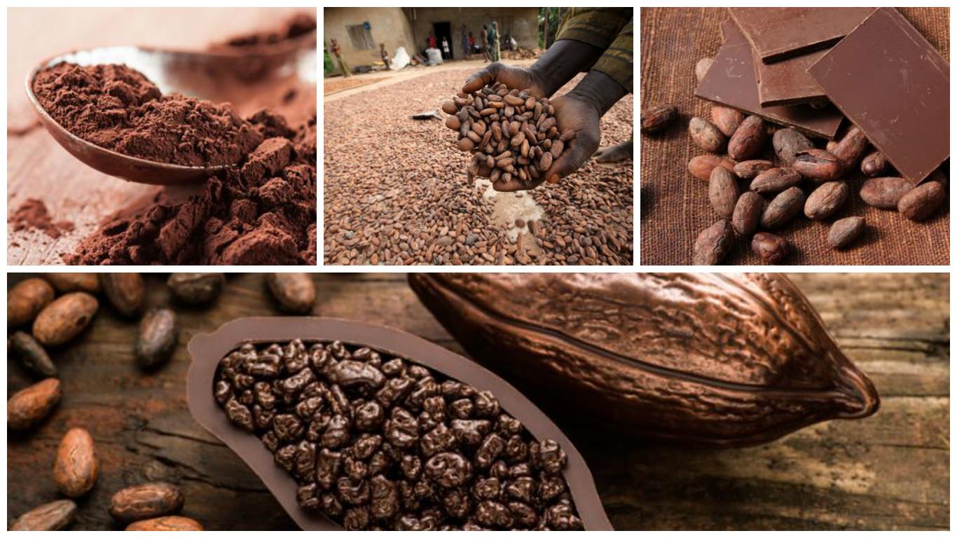 El cacao, no el chocolate, es el gran aliado de nuestra salud