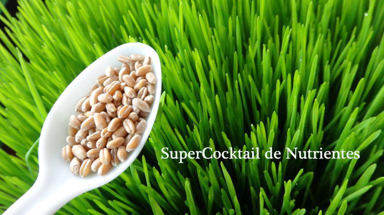 Fuente inagotable de nutrientes,vitaminas, betacaroteno, aminoácidos y aceites omega.