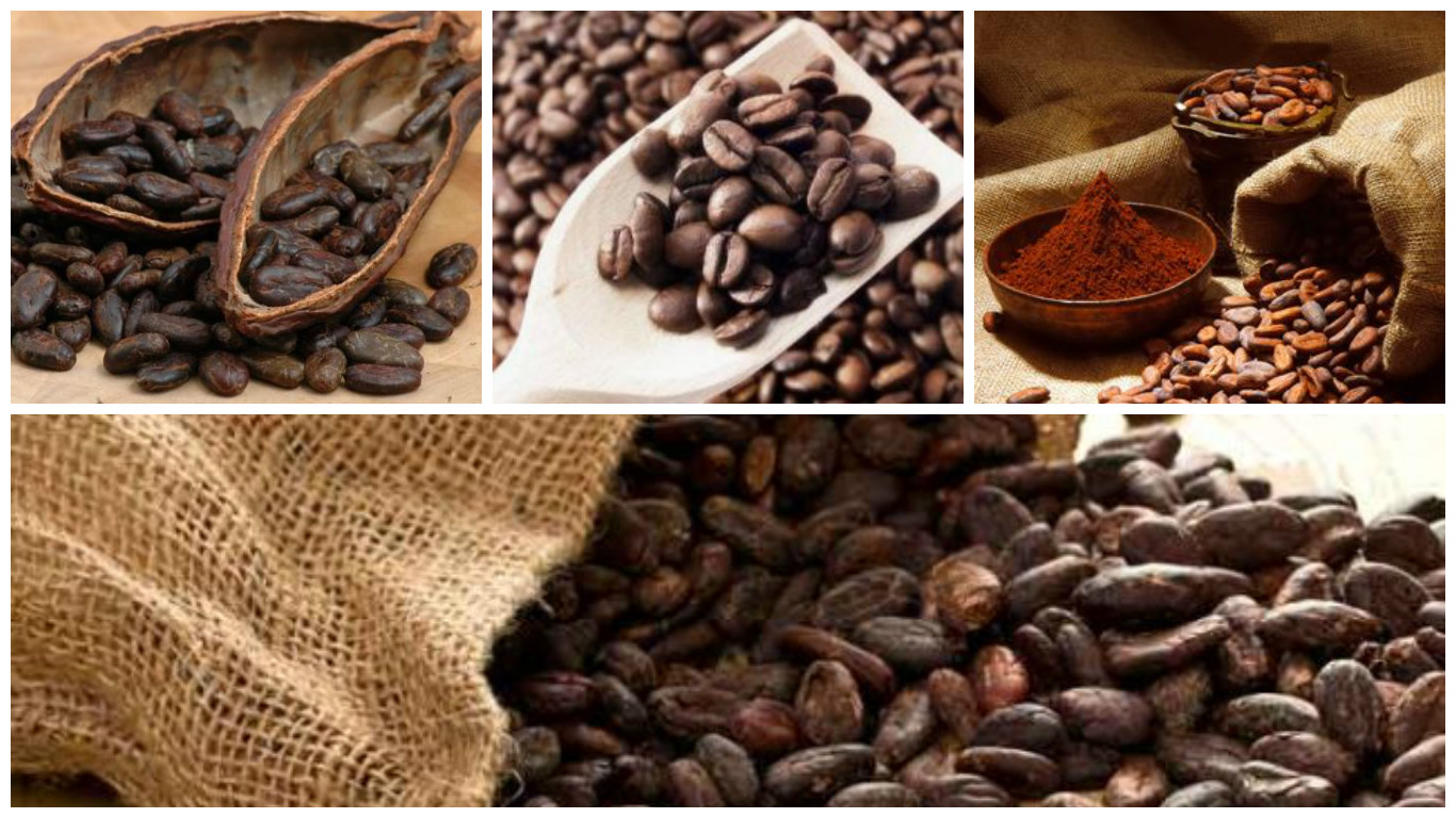 Dónde comprar cacao ecológico
