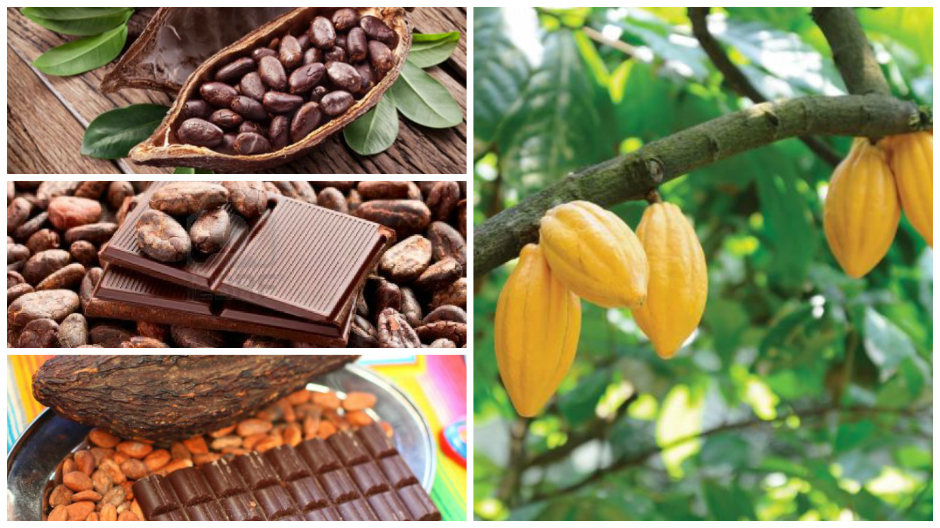 ¿Cuáles son las propiedades del cacao?