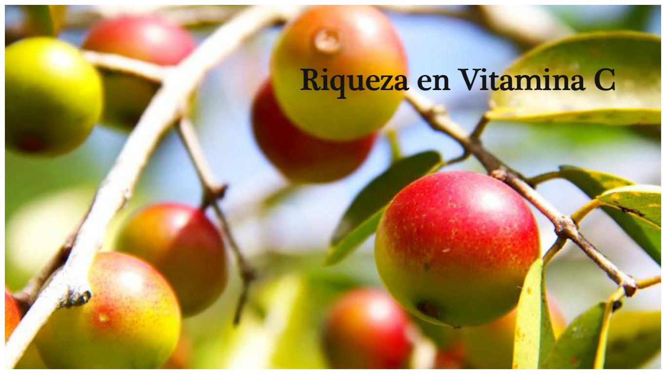 Vitamina C y efecto antioxidante