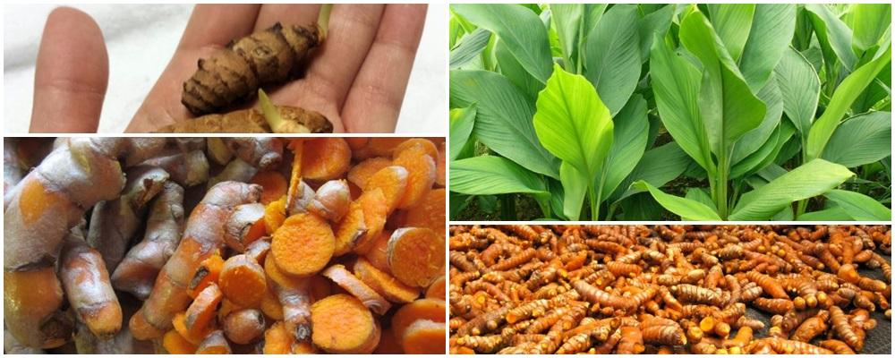 Azufre de Indias, el mejor antioxidante