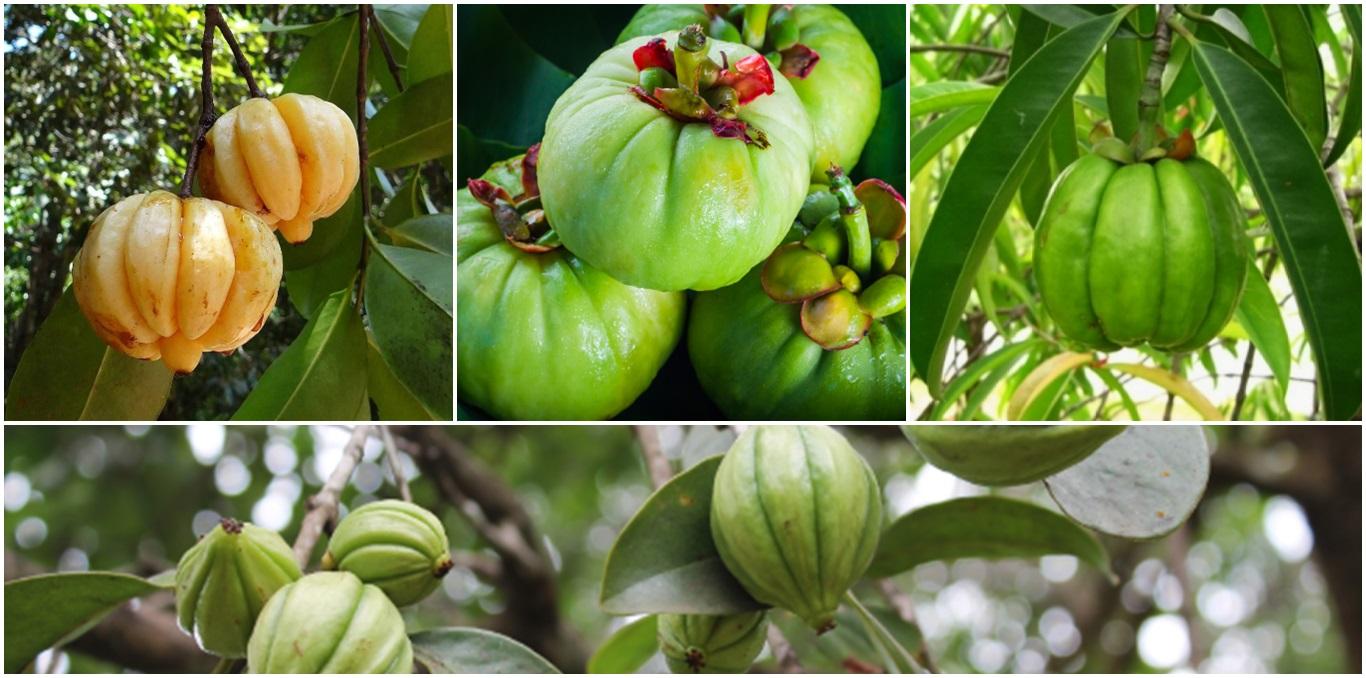 Fruto tropical asiática