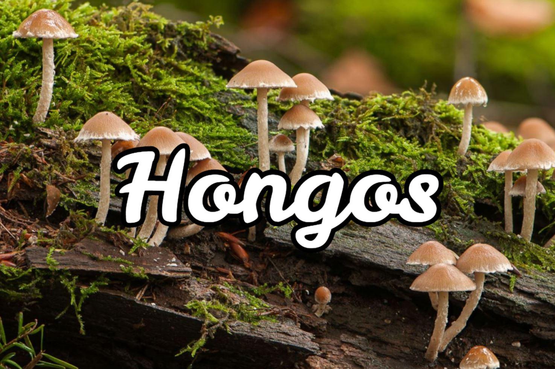 hongos medicinales como superalimento