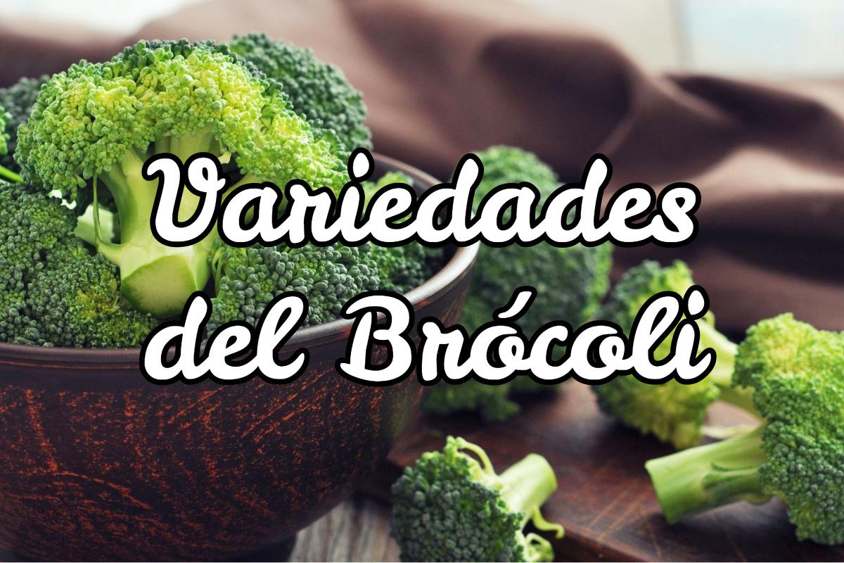 Tipos de Brócoli