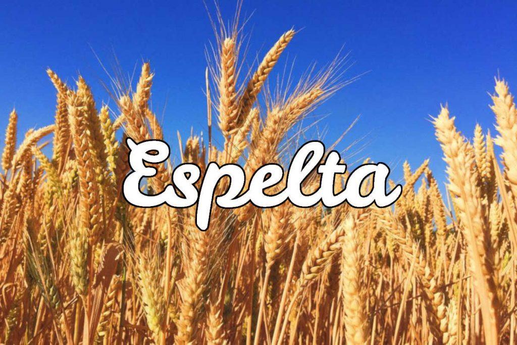 Espelta